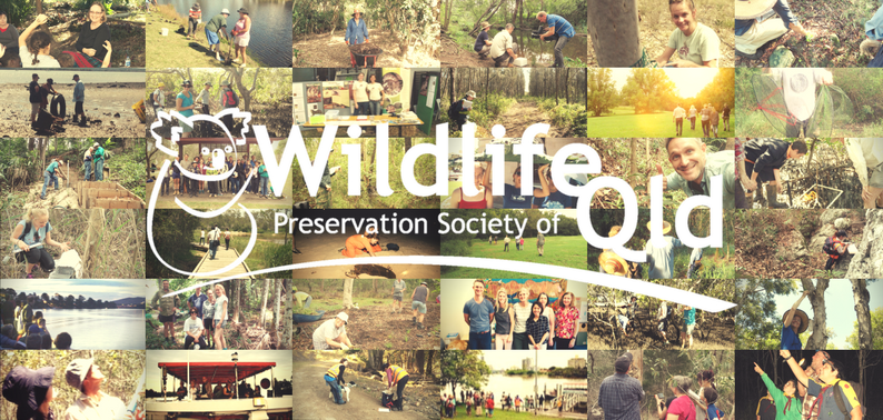 Find the Wildlife Preservation Society of QLD at the Eco Expo