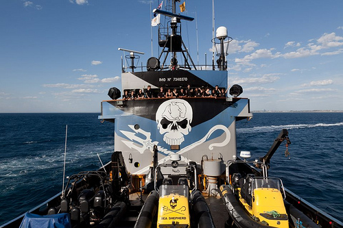 Find Sea Shepherd at the Eco Expo