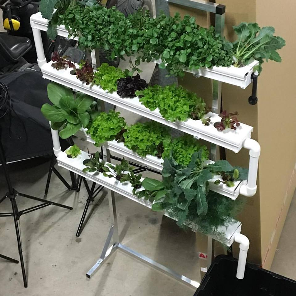 The Salad Table at the Eco Expo